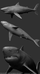 shark_zb01