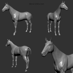 horse_zb